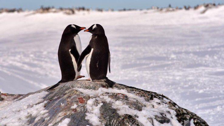 Die Linux-Geschichte: Von der Liebe zu Open Source.