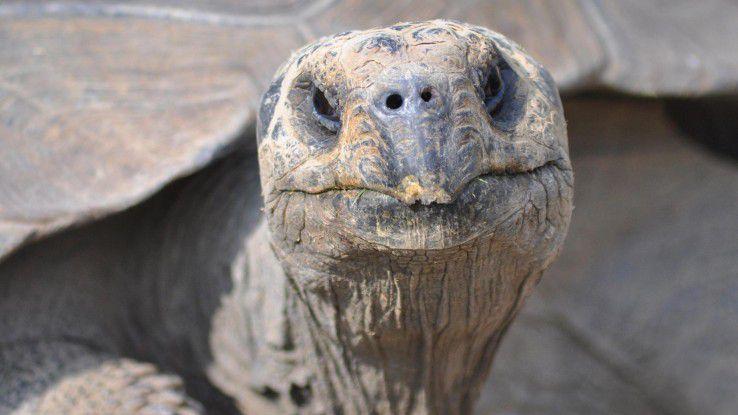 Langsam und beständig wie eine Schildkröte – oder wendig und agil? Eine Kernfrage für heutige Unternehmen.