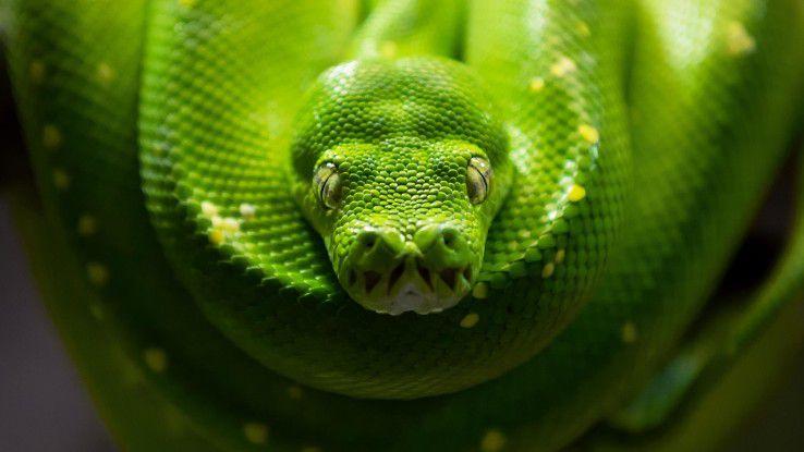 Auf Tuchfühlung mit Python: Damit das eine stressfreie Erfahrung wird, sagen wir Ihnen was Sie zum Durchstarten brauchen.