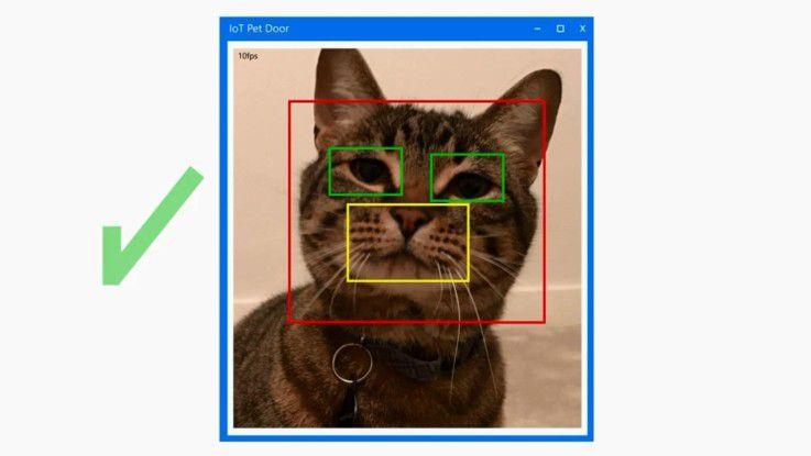 Projekt für die Feiertage gefällig? Wie wär's mit Gesichtserkennung für die Hauskatze?