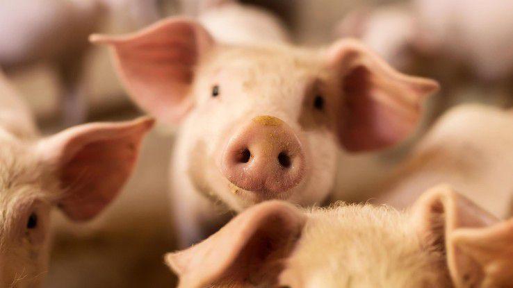 Im Schweinestall dürfte bald mehr Digital-Know-how gefragt sein. Schließlich soll mit Hilfe der Digitalisierung auch das Wohl der Tiere verbessert werden.