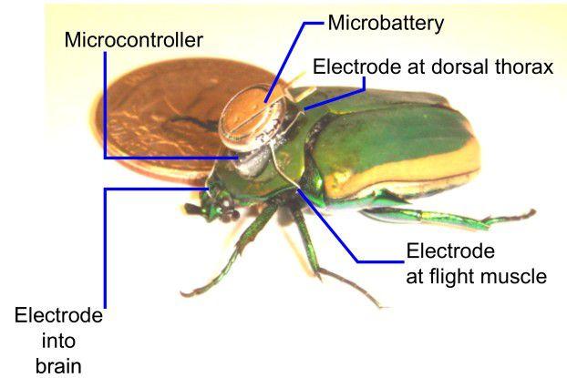 Die technische Ausrüstung des Cyborg-Käfers im Überblick. Foto: College of Engineering UC Berkely