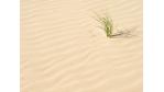 Zusammenstreichen des Gründungszuschusses: Dürre Zeiten für Gründer - Foto: Shutterstock, Asaf Eliason