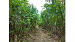 Finanzierung von IT-Firmen: Förderinstrumente - Durchblick im Dschungel - Foto: Christian Pedant - Fotolia.com