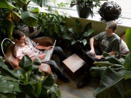 Jede Menge Grünpflanzen: Eines der Büros von Google in Zürich.