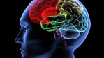 Studie: Das Ballen der rechten Faust bringt Wörter ins Gehirn - Foto: V. Yakobchuk_Fotolia