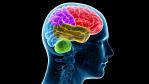 Buchtipp: Kampf dem faulen Gehirn - Foto: Sebastian Kaulitzki - Fotolia.com