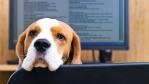 Lieber Hund im Büro als Firmenhandy: Die wichtigsten Nebenleistungen für Mitarbeiter - Foto: Igor Normann-shutterstock.com