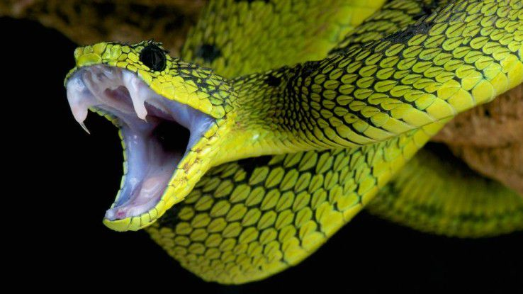 Gift via Virtualisierung: Die Sicherheitslücke Venom bedroht virtuelle Maschinen.