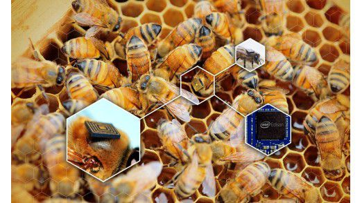 beehive with Intel Edison sensors