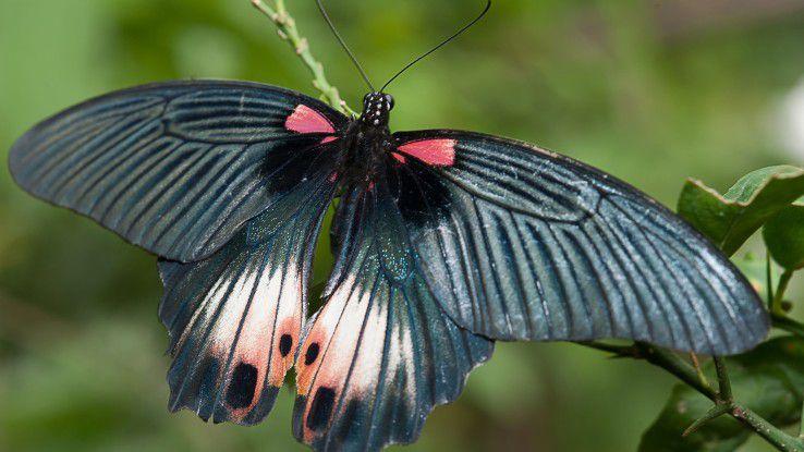 So, wie der Flügelschlag eines Schmetterlings nach einer Metapher einen Tornado auslösen kann, so empfindlich können auch Analysen auf geringfügige - auch unbeabsichtigte - Manipulationen in Datenbeständen reagieren.