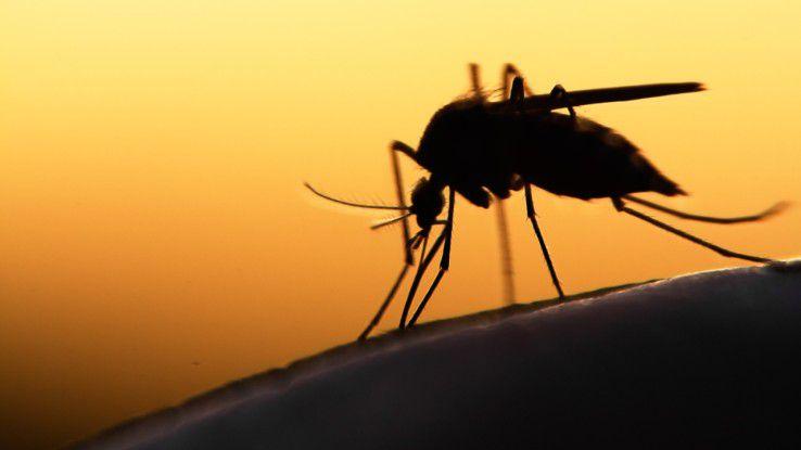 Zikaviren werden in den meisten Fällen durch den Stich infizierter Mücken übertragen.