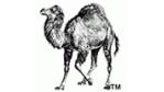 Perl 5.8.0 ist verfügbar