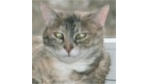A.T.-Kearney-Studie: Ein Fünftel der IT-Budgets ist für die Katz'