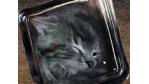 Die besten Hoaxes: Angelina Jolie adoptiert Bonsai-Katzen aus Nigeria