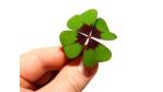 Wege zum Glück: Was IT-Profis von Forrest Gump lernen können - Foto: Christian Jung/Fotolia.com
