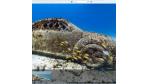 Witzig & skurril: 75 verrückte Bilder auf Google Street View - Foto: Google